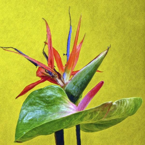 botanicart 85