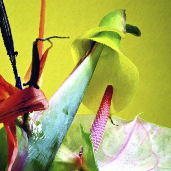 botanicart 86