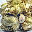 garlic o1