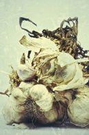 garlic o2