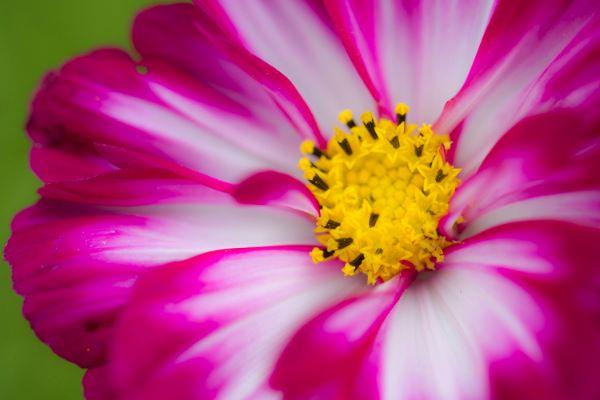Fototips B - 12 - 03 - deler av en blomst