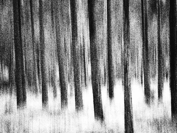 Fototips B 15 - 07 - skog