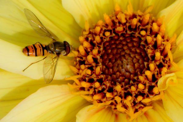 Fototips B - 12 - 09 - innsekter