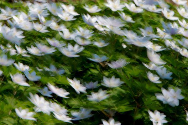 Fototips B - 09 - Blomstereng