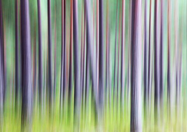 Fototips A - 05 - skog