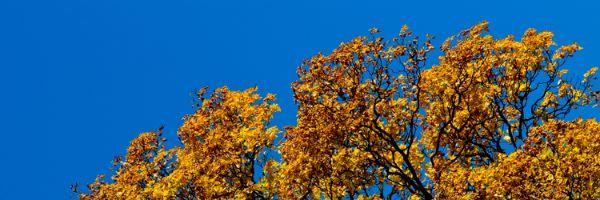 Fototips A - 14 - oransje og blå himmel