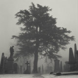 Tree, Old Town Cemetery, Stirling