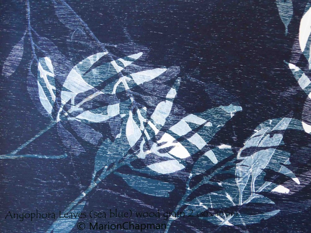 Angophora Leaves (sea blue) wood grain 2