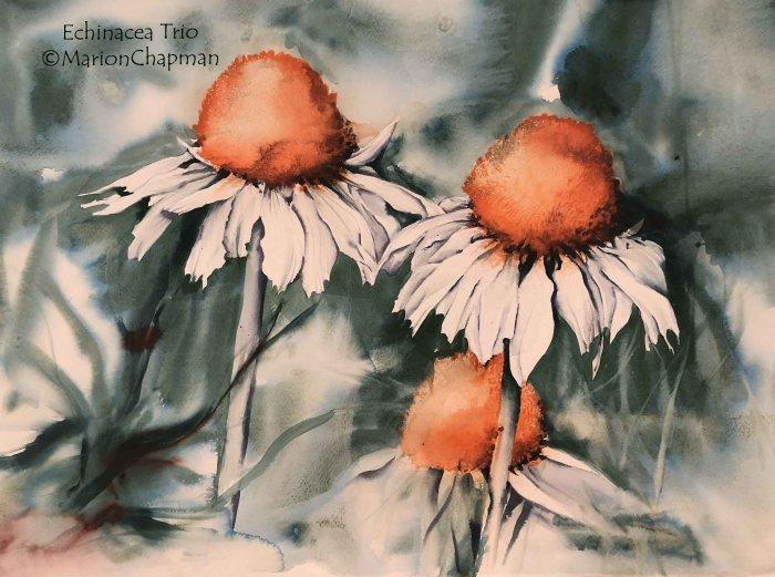 Echinacea Trio