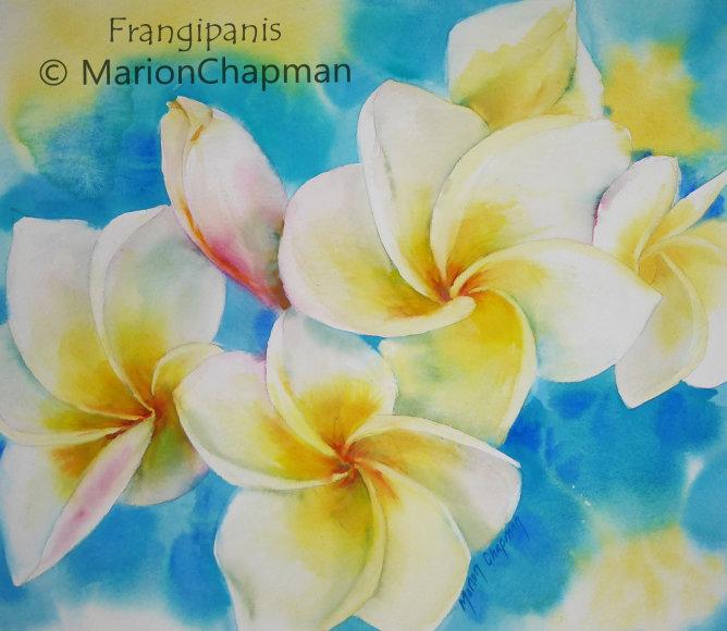 Frangipanis