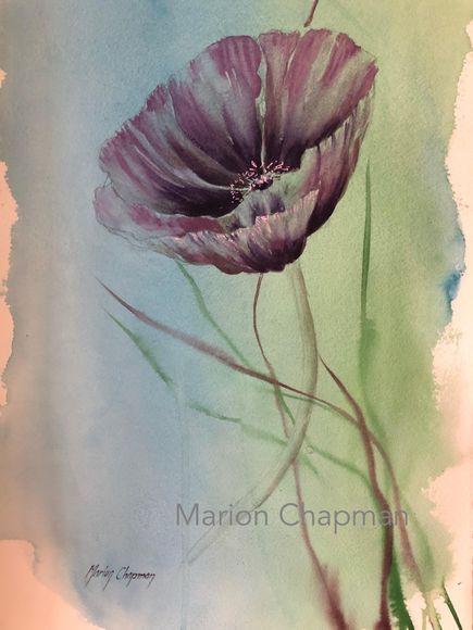 Single poppy by Marion Chapman