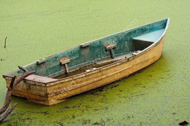 abandoned boat in algae