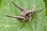 cricket in Dorset countryside
