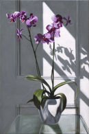 Pink Orchids in June Sunshine (2011, oil on canvas, 60 x 40 cms)