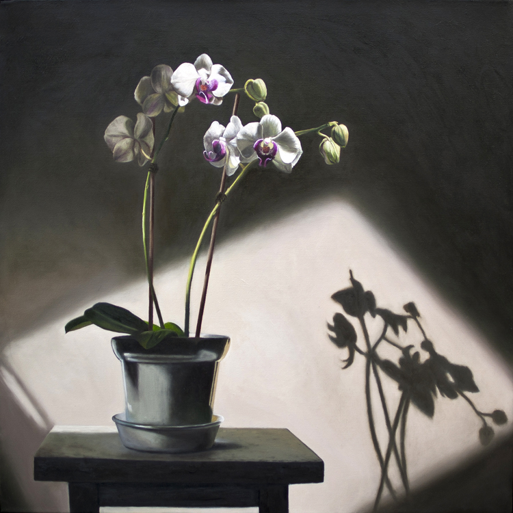 A Pot Of White Orchids (60 x 60 cms, oil on canvas, 2013)