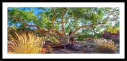 Tree of Hope, Kings Canyon, NT