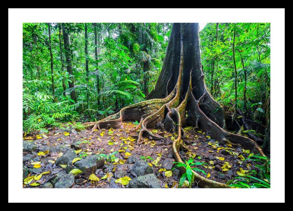 tree of wisdom, TNQ