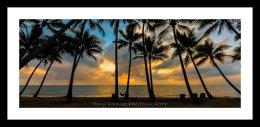 paradise, palm cove TNQ