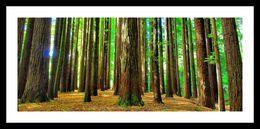 The Redwoods, Victoria