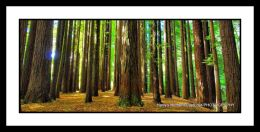 The Redwoods, Victoria