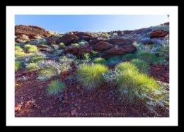 Garden outback, Pilbara WA