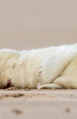 Seal Pup 2