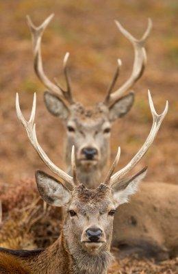 Between the Horns