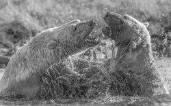 Two Muddy Bears