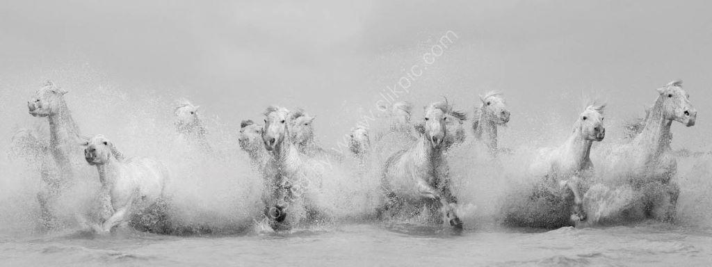 Camargue Horses 2