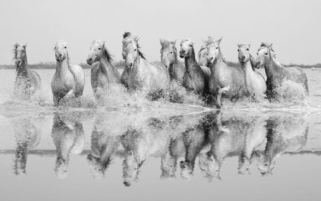 Camargue Horses 3
