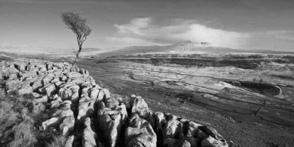 Lonesome Tree Inglebrough
