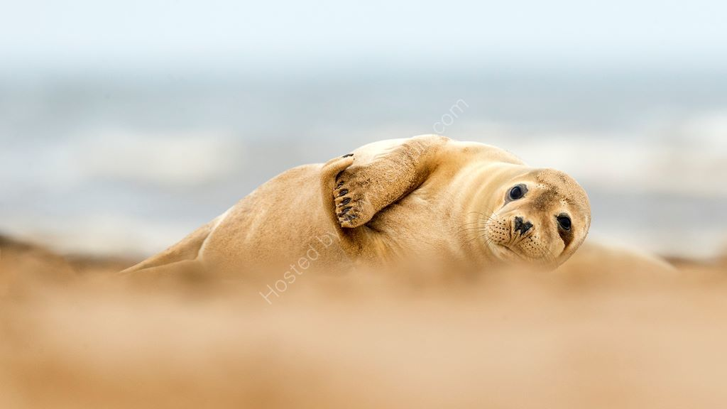 Through the sand dune