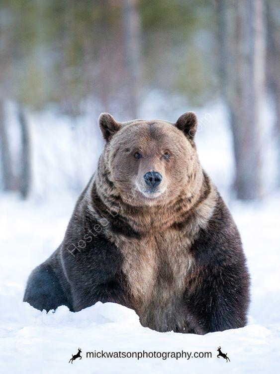Bear sees me