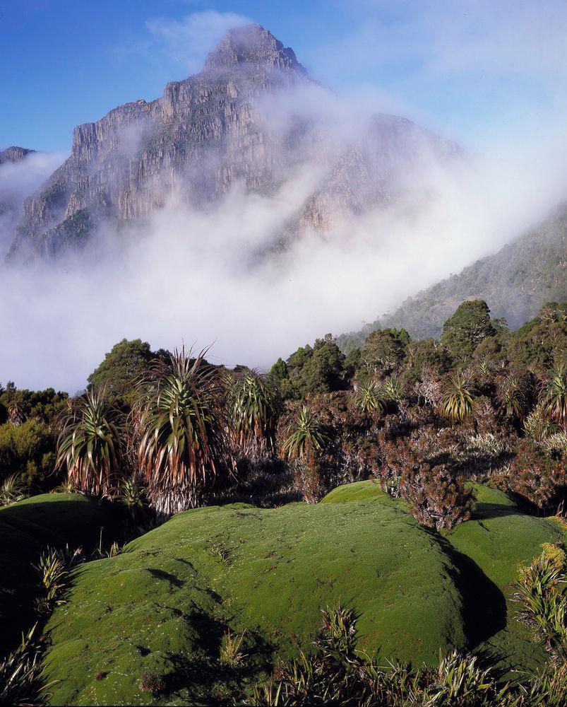 Clearing Mist, Mt Ann