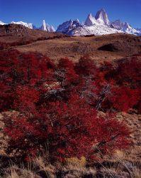 Lenga, Cerro Torre, Cerro Fitzroy