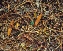 Forest floor, Te Urewera