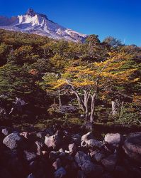 Lenga, Los Cuernos Del Paine