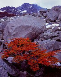Lenga, Los Torres del Paine