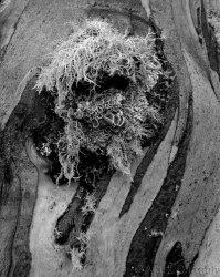 Lichen Detail