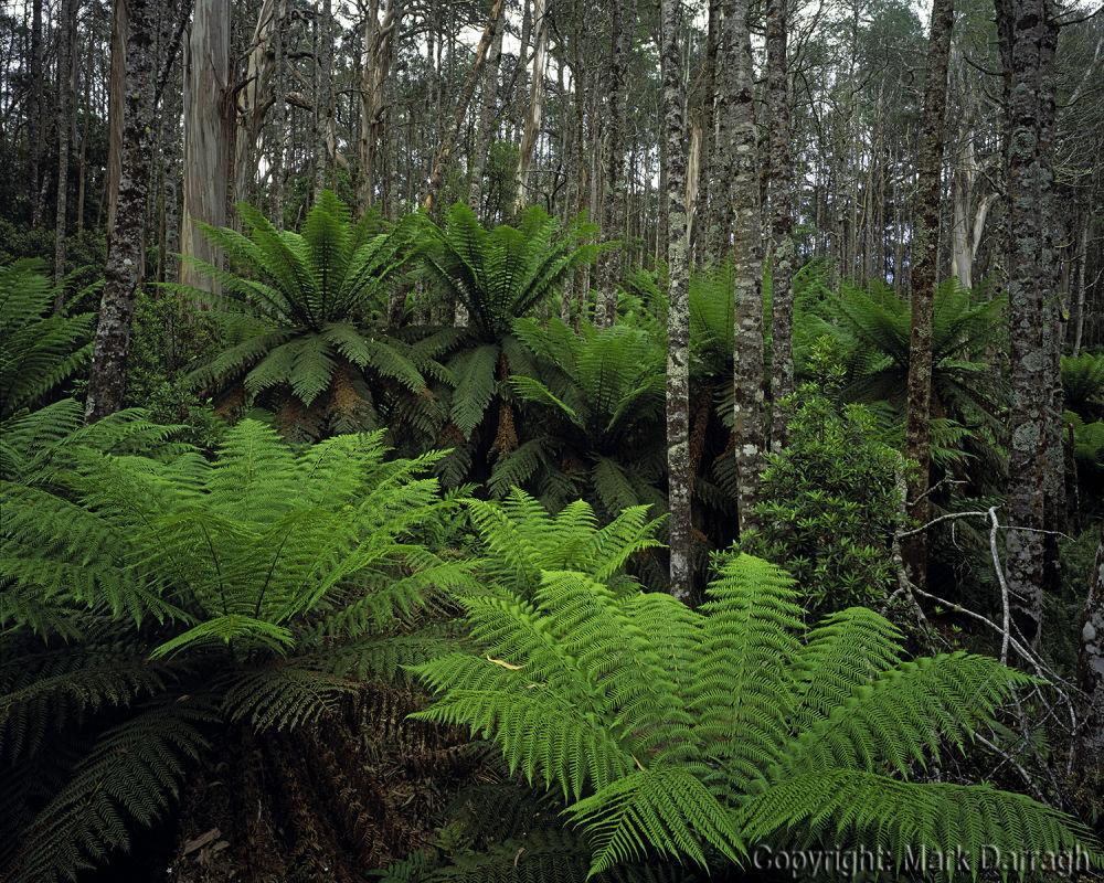 Mixed forest, Cobb Hill