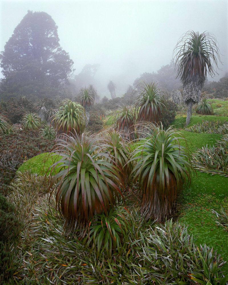 Richeas in mist