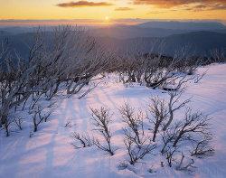 Snow Gums, Little Feathertop