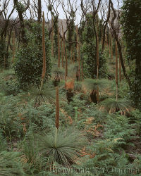 Regenerating vegetation near Mussolini Rocks