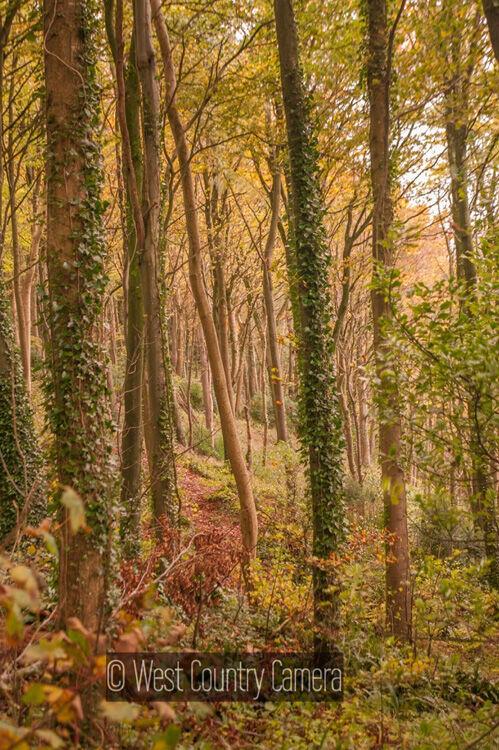 Into the woods III (1 of 1)