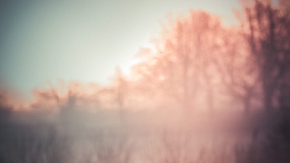 Misty morning V