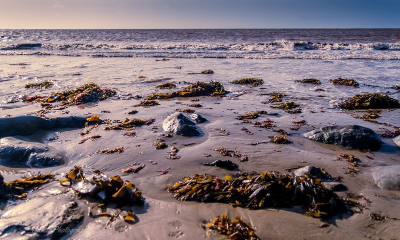 Low down seaweed