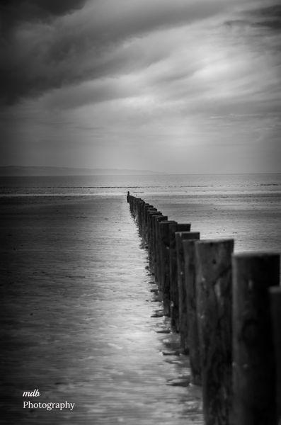 Line of wooden posts 1