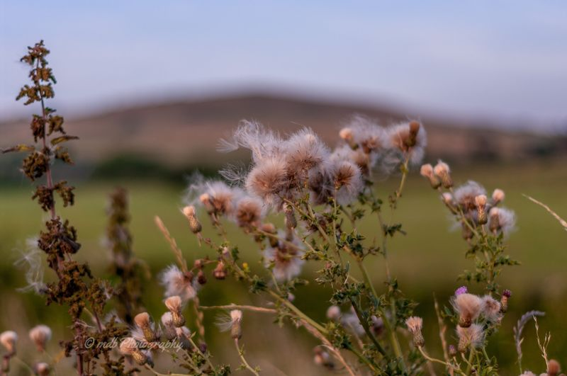Scattered by the wind