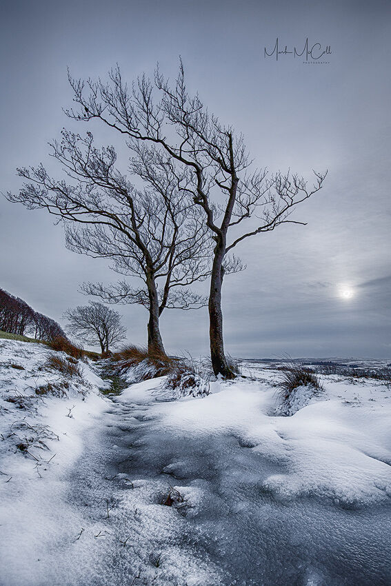 Winters day, Ayrshire, Scotland