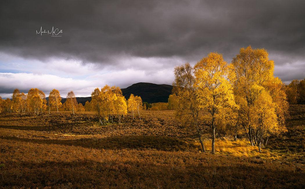 Autumn splendour, Cairngorms national park, Scotland